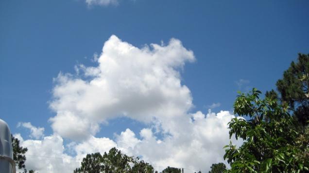 Mây vườn nhà (Ảnh: Trần thị LaiHồng)